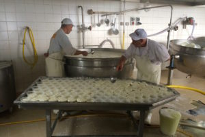 Ricotta Cheesmaking in the Madonie