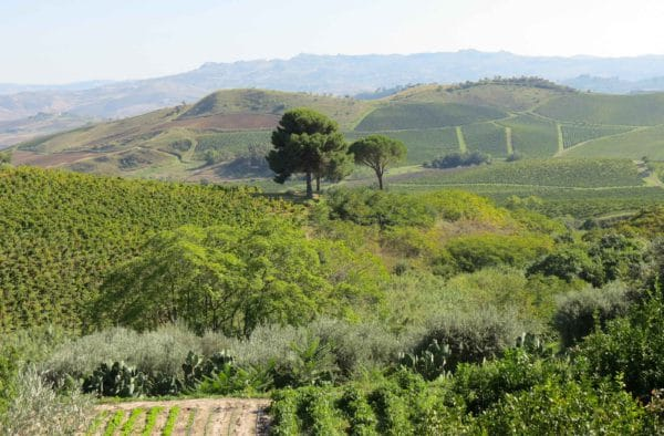 Sicilian Vineyards, Wine and Food Tour